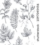 floral seamless pattern with... | Shutterstock .eps vector #1097045456
