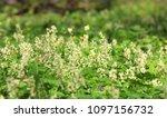 wild flower meadow in spring... | Shutterstock . vector #1097156732