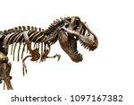 Fossil Skeleton Of Dinosaur...