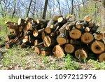 wooden log store in spring... | Shutterstock . vector #1097212976
