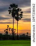 sugar palm tree in twilight | Shutterstock . vector #1097238362