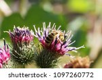 macro of the caucasian and... | Shutterstock . vector #1097260772