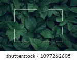 nature background  abstract... | Shutterstock . vector #1097262605