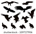 hunting eagle detailed vector...   Shutterstock .eps vector #109727906