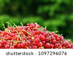 red sweet currant berry over... | Shutterstock . vector #1097296076