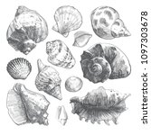 Sea Shells Sketch Set. Grey...