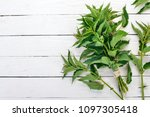 fresh nettles on a white wooden ... | Shutterstock . vector #1097305418