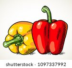 pair of fresh sweet peppers... | Shutterstock .eps vector #1097337992