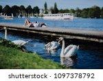 grace white grace swans on... | Shutterstock . vector #1097378792