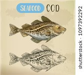 atlantic or pacific cod sketch. ... | Shutterstock .eps vector #1097392292