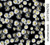 daisy seamless pattern | Shutterstock . vector #1097396702