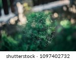 the spider web  | Shutterstock . vector #1097402732