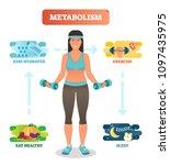 metabolism concept vector... | Shutterstock .eps vector #1097435975