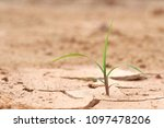 the plants grow on the dry... | Shutterstock . vector #1097478206