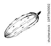 cucumber. pickles. blanks for...   Shutterstock .eps vector #1097565002