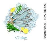 sprat sketch vector fish icon.... | Shutterstock .eps vector #1097603522