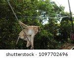 monkey in the wild | Shutterstock . vector #1097702696