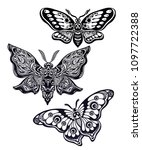 a collection of butterflies or... | Shutterstock .eps vector #1097722388