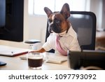 french bulldog dressed as... | Shutterstock . vector #1097793092