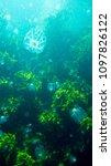 jelly fish underwater   Shutterstock . vector #1097826122