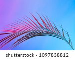 tropical and palm leaves in... | Shutterstock . vector #1097838812