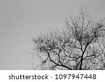 black tree with a grey sky | Shutterstock . vector #1097947448