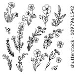 set of wild flowers. hand drawn ... | Shutterstock .eps vector #1097961542