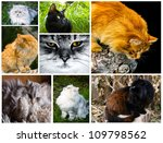 collage from several cat image... | Shutterstock . vector #109798562