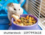 A Hamster Eating Inside His...