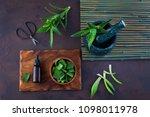 bottle of aloe vera essential...   Shutterstock . vector #1098011978