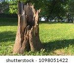 big broken tree trunk stump  in ... | Shutterstock . vector #1098051422