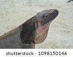 a closeup of an iguana on allen'... | Shutterstock . vector #1098150146