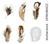 feathers set on white background | Shutterstock . vector #1098180422