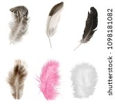 feathers set on white background | Shutterstock . vector #1098181082