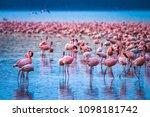 africa. kenya. lake nakuru....   Shutterstock . vector #1098181742