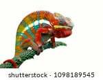 chameleon with white backround  ... | Shutterstock . vector #1098189545