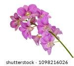 beautiful dendrobium orchid...   Shutterstock . vector #1098216026