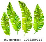 tropical leaves  isolated... | Shutterstock . vector #1098259118