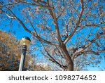 antique streetlamp on blue sky... | Shutterstock . vector #1098274652