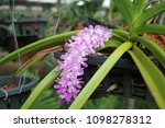 beautiful white and pink orchid ...   Shutterstock . vector #1098278312