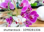 beautiful pink phalaenopsis...   Shutterstock . vector #1098281336