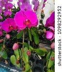 pink orchid pattern   Shutterstock . vector #1098292952