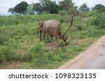 Photo Of An Elephant In Its...