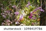 the bloom orchids in the garden ...   Shutterstock . vector #1098419786