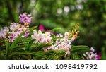 the bloom orchids in the garden ...   Shutterstock . vector #1098419792