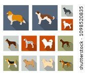 dog breeds flat icons in set... | Shutterstock .eps vector #1098520835