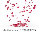 rose petals fall to the floor.... | Shutterstock . vector #1098521705
