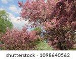 beautiful outdoor image of... | Shutterstock . vector #1098640562