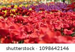 beautiful and colorful blossom... | Shutterstock . vector #1098642146