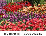 beautiful and colorful blossom... | Shutterstock . vector #1098642152